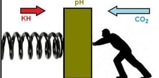 CO2, pH e KH: spiegazione semplice dell'effetto tampone