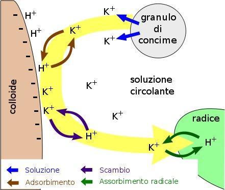 Schema di scambio ionico