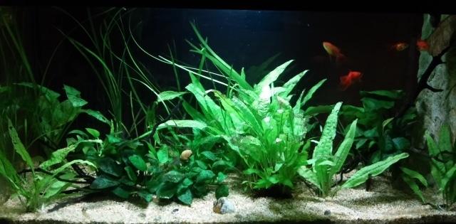 acquario piccoli oranda