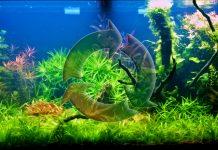 Ciclo dell'azoto in acquario