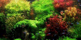 Piante d'acquario e zone di origine