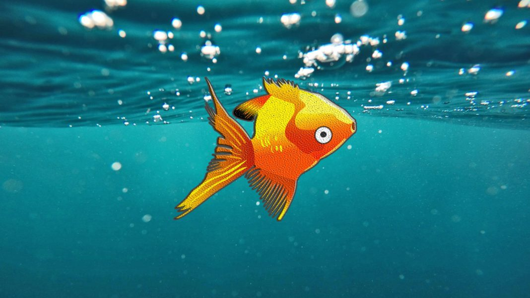 Vescica natatoria nei pesci rossi: cure e prevenzione