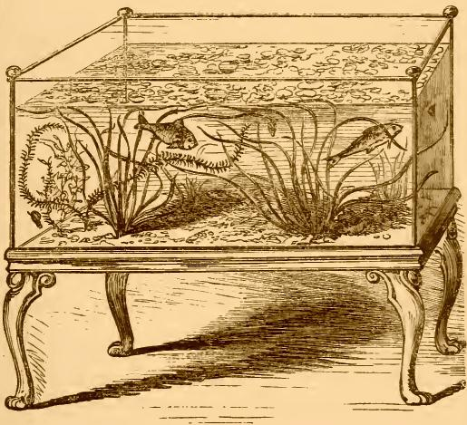 Acquario del XIX secolo