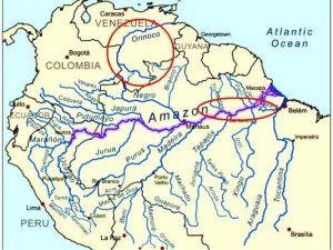 Amazzonia Hemigrammus rhodostomus