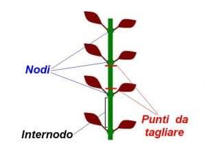 Potatura piante a stelo