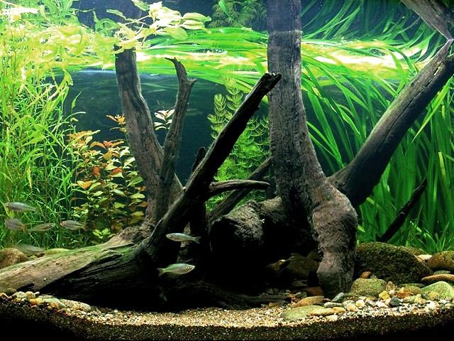 Acquario biotopo - America centrale