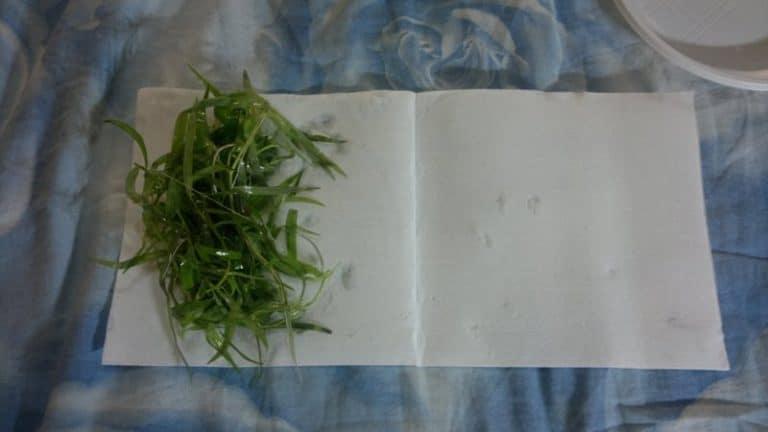 Spedire piante scottex