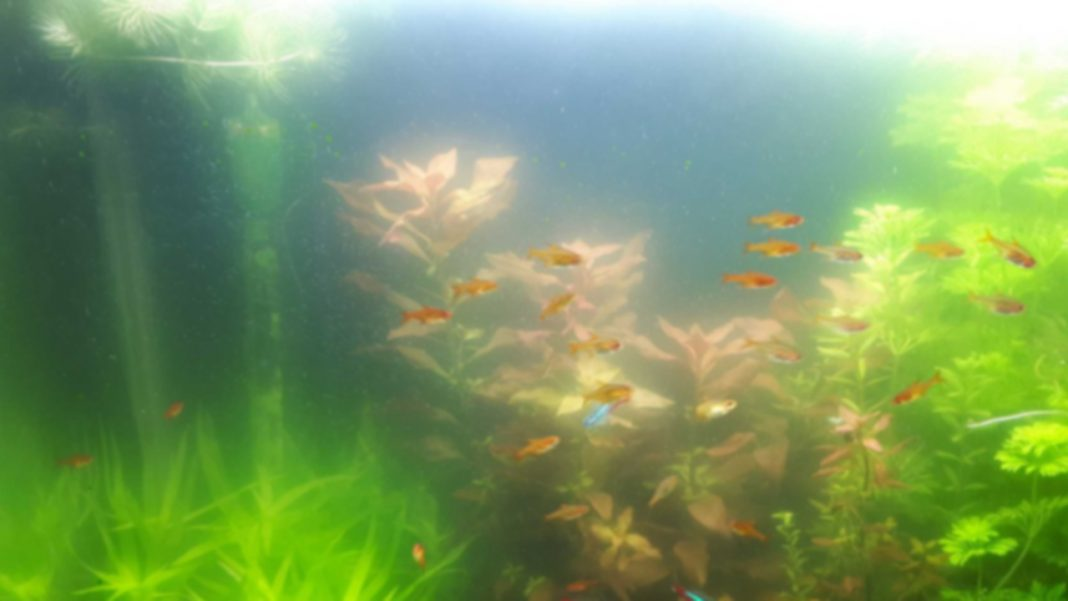 Nebbia batterica in acquario