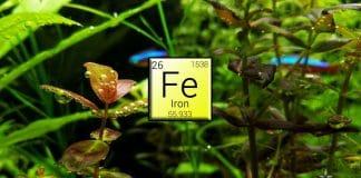 Ferro - Fertilizzanti per acquario