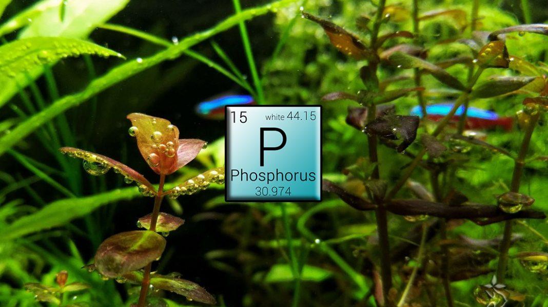 Fosforo - Fertilizzanti per acquario