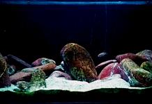 Allestire un acquario per Ciclidi del Tanganica