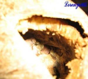 Polpa Noce di cocco
