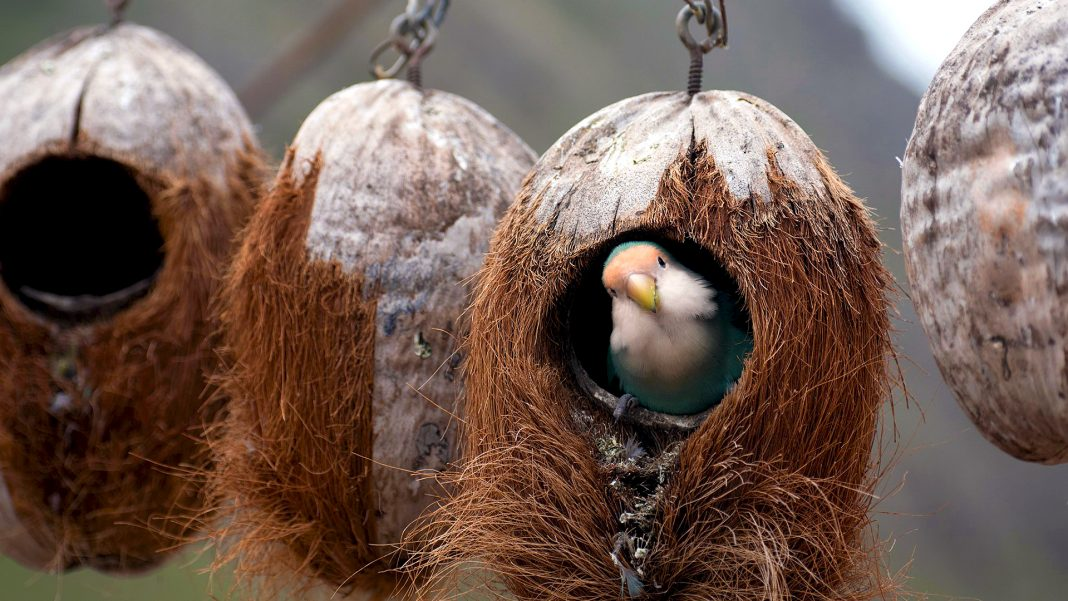 Tane per acquario con noci di cocco