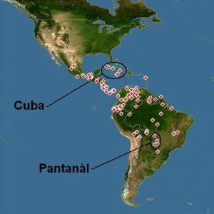 Ludwigia inclinata Cuba e Pantanal