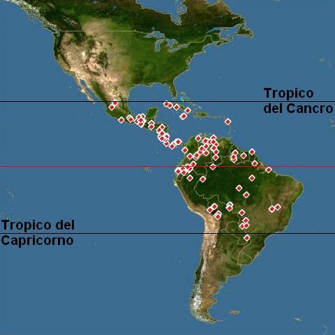 Ludwigia inclinata e tropici