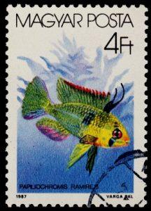Mikrogeophagus ramirezi francobollo