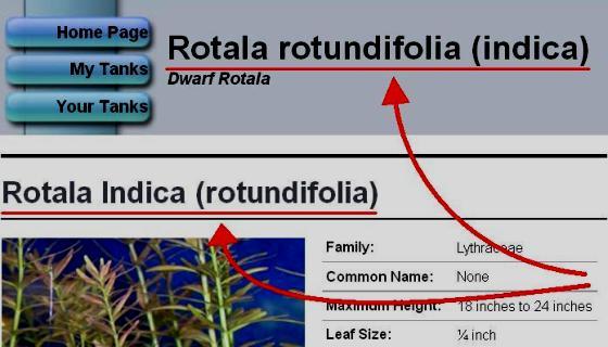 Articoli su Rotala rotundifolia indica