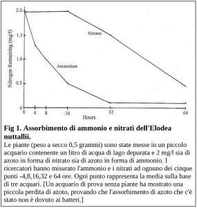 Figura 1. Assorbimento di ammonio e nitrati dell'Elodea nutallii