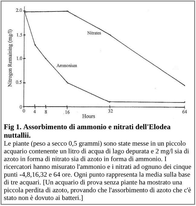 Assorbimento dell'azoto dell'Elodea nuttallii