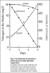 Figura 2. Assorbimento di ammonio e nitrati da parte della Spirodela oligorrhiza