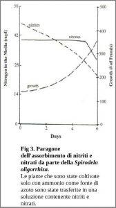 Figura 3. Paragone dell'assorbimento di nitriti e nitrati da parte della Spirodela oligorrhiza