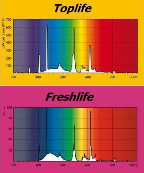 Spettri di emissione delle lampade di serie del Ferplast Cayman 80