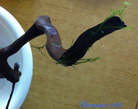 Piante epifite muschio su legno