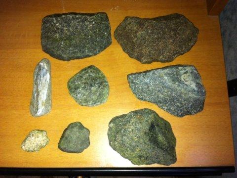Piant epifite rocce