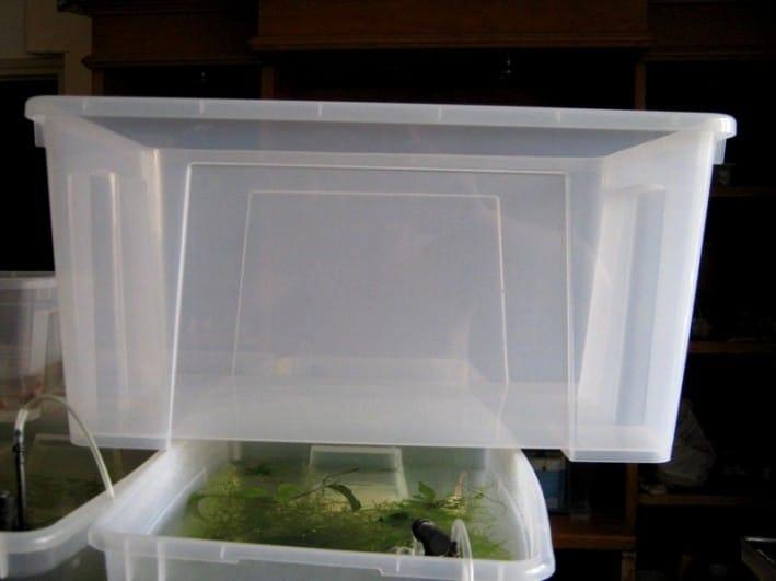 Vasca IKEA da 40 litri usata per la riproduzione dei carassi