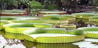 Le piante galleggianti