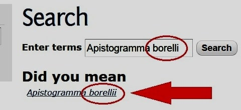 Nome corretto Apistogramma borellii
