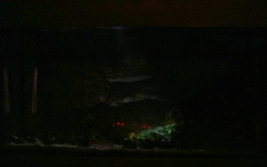 Luce lunare acquario foto notturna