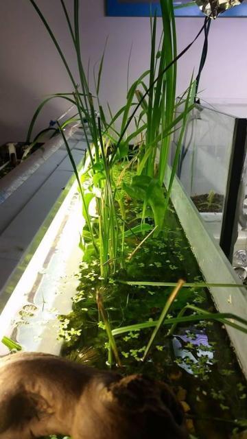 Paludario piante emerse