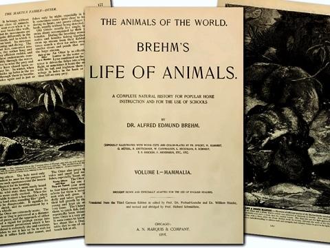 "celebre, monumentale opera ""La vita degli animali"""