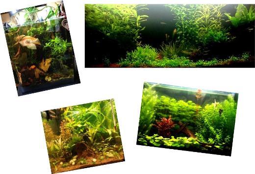 Esempi di acquari con PMDD