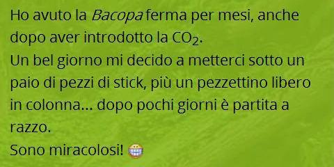 Topic del forum Acquariofilia Facile