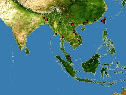 Rotala wallichii Mappa