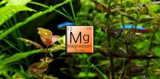 Magnesio - Fertilizzanti per acquario