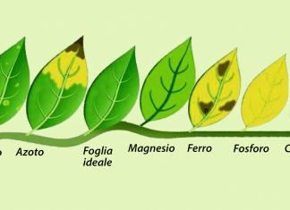 Macro e micro-elementi per le piante d'acquario