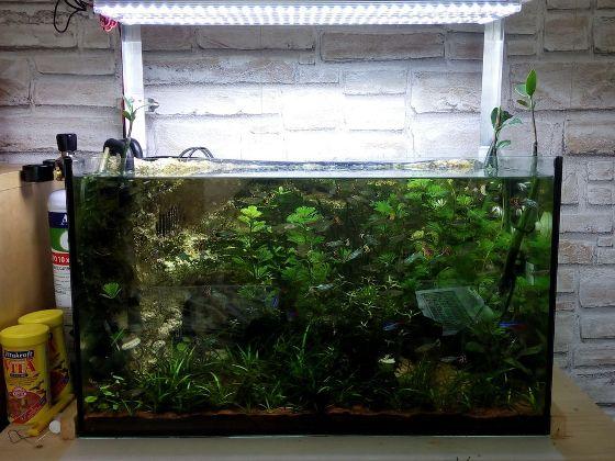 Sfondo emerso acquario aperto