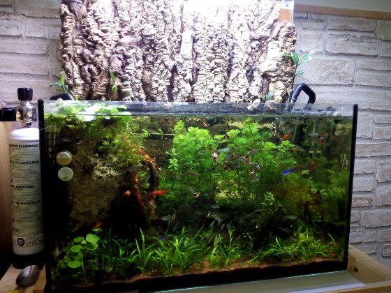 Sfondo emerso acquario aperto verniciato