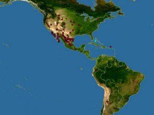 Triops longicaudatus Mappa