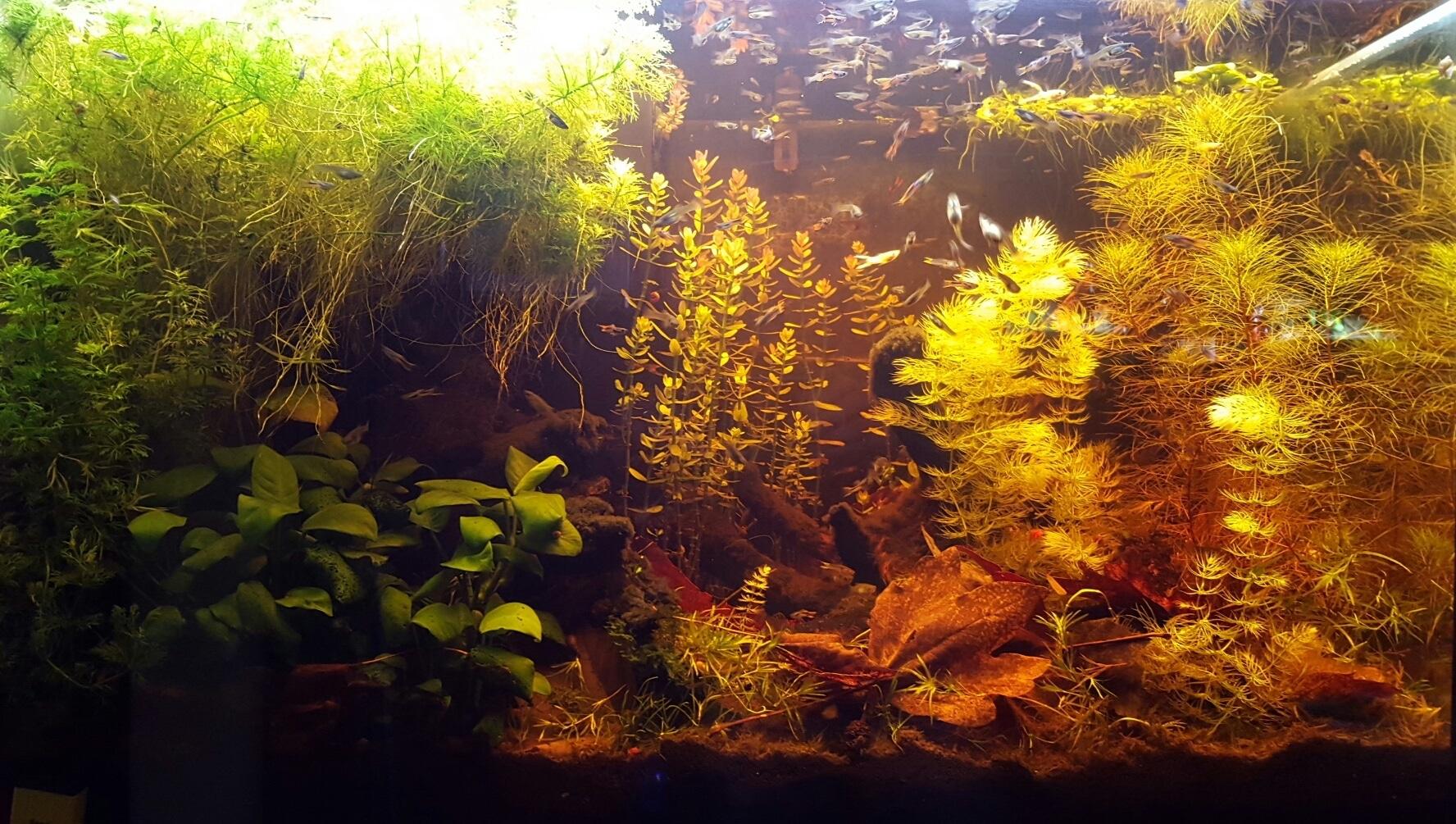 Panoramica acquario senza filtro, riscaldatore e co2