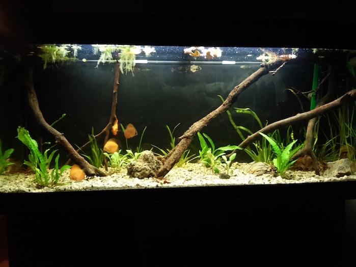 Valori aquario discus