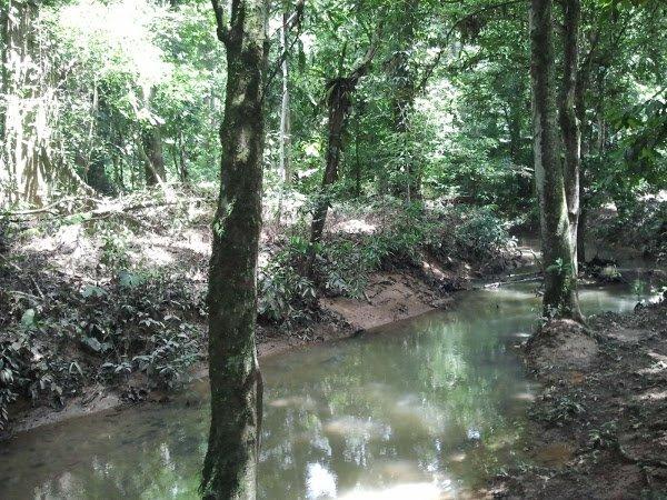 Java fern habitat