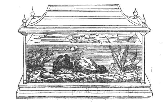 Acquario senza filtro di Michele Lessona