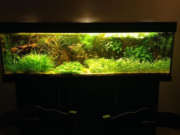 Panoramica plantacquario