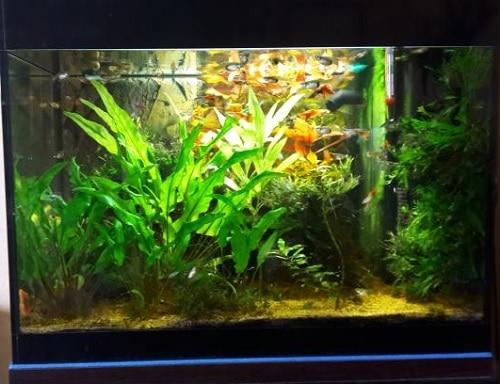 Acquario Askoll Pure con illuminazione modificata