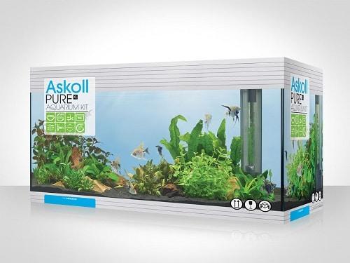 Askoll PURE XL