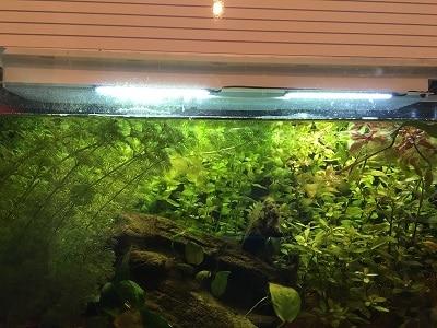 Acquario illuminato con i LED COB